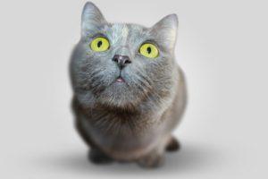 macska ivartalanítás a dr. bubó Állatorvosi rendelőben szigetszentmiklóson