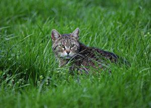 A macskát is védjük a kullancsoktól