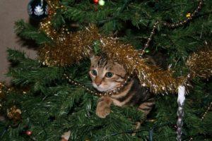 cicánk karácsonykor