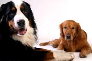kutya ivartalanítási akció dr. Bubó Állatorvosi Rendelő Szigetszentmiklós