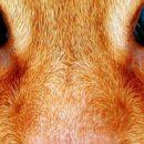 A macskaleukózis egy alattomos betegség – FELV
