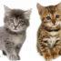 Miért fontos a féreghajtás macskák esetében?