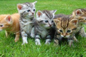 Féreghajtás macskáknál