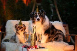 szilveszteri tűzijátéktól félős kutya