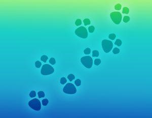 új állatorvosi rendelő